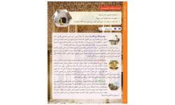 Miftah Al-Arabiyya B1 (Speaking And Listening)